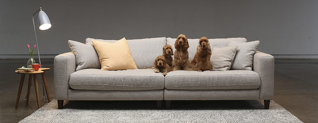 Plush Goes To The Dogs With The New Advertising From Melbourne Based Agency  Akkomplice