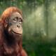 Darrell Lea | 100% Palm Oil Free